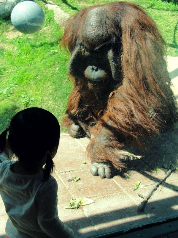 emma & orangutan