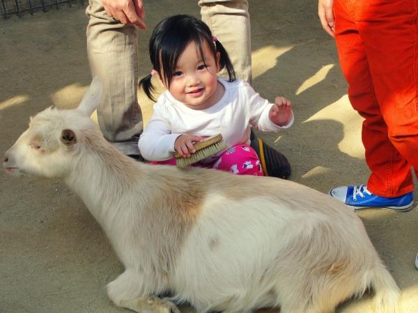 petting zoo1