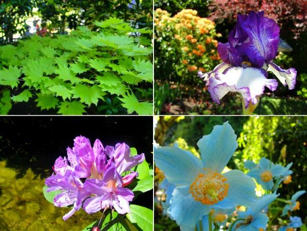 japanese garden5