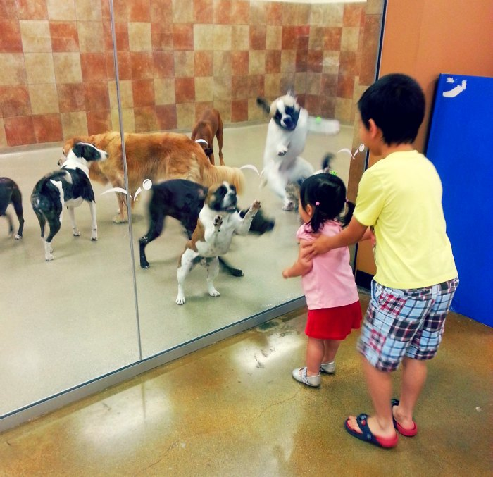 jul 13 petsmart