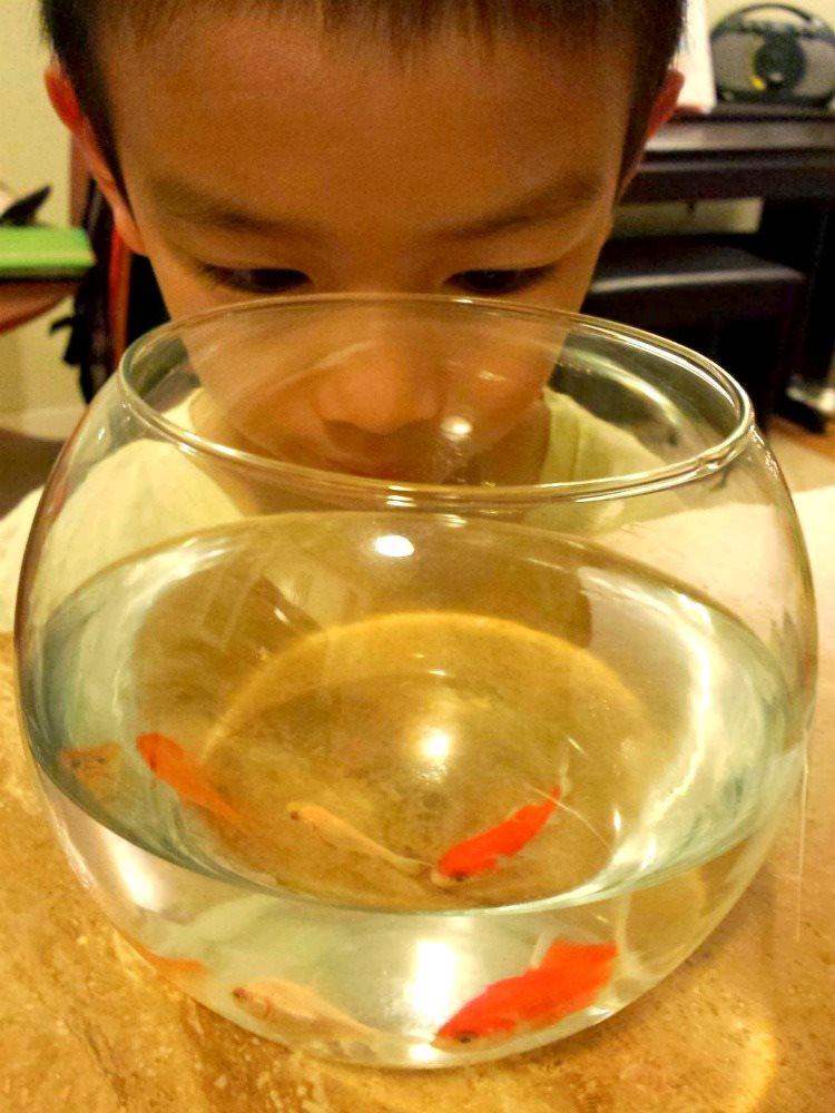12 fish