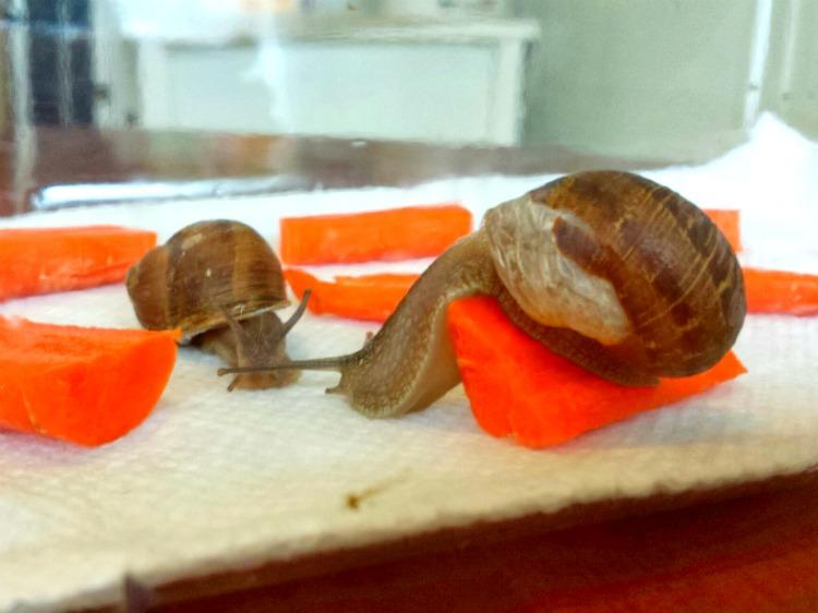 13 snails