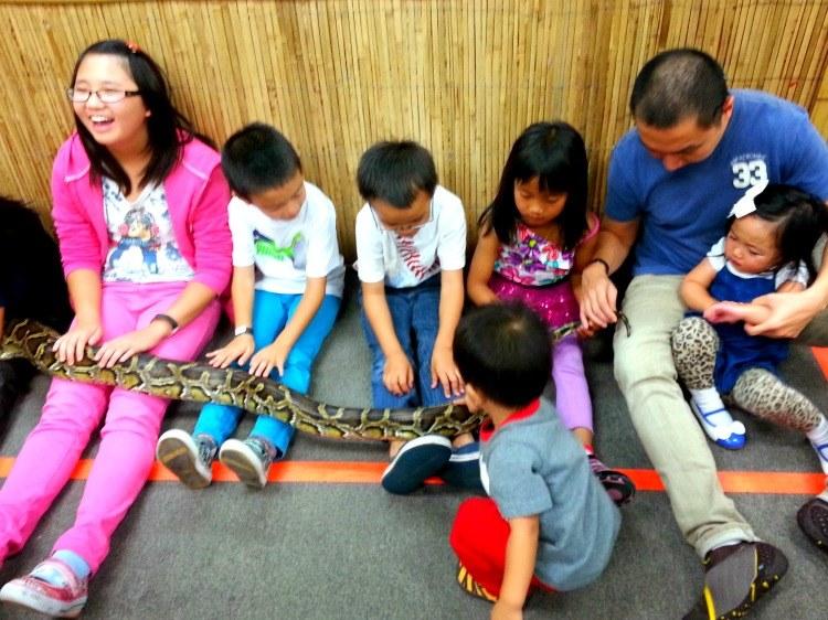 7 burmese python