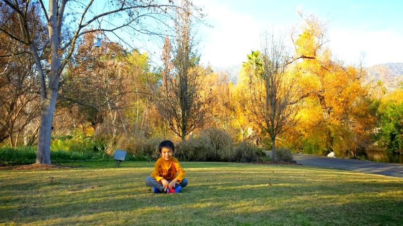 california native habitat garden