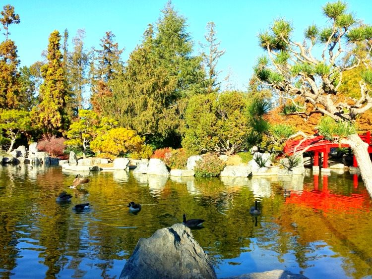day 2 japanese garden 7