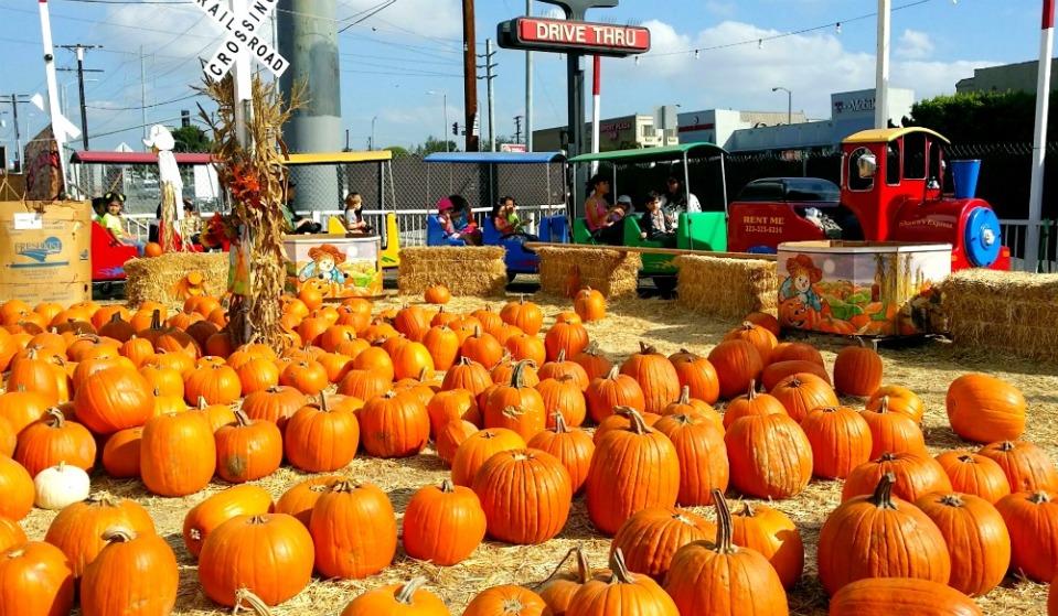 pumpkin patch3