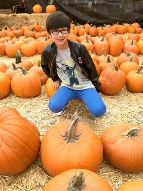 pumpkin-patch-3